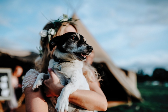 Dog at a Cheshire Tipi Wedding